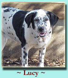 ~ Lucy ~ Pointer Mix